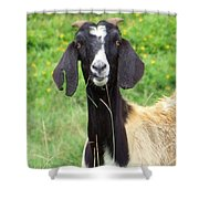 Goat Dental Floss Shower Curtain