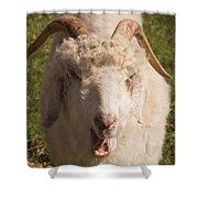 Goat Eating Shower Curtain