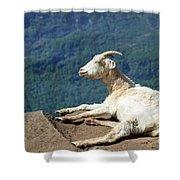 Goat Enjoy The Sun Shower Curtain