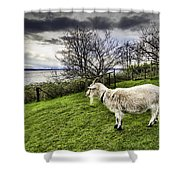 Goat Enjoying The View Shower Curtain