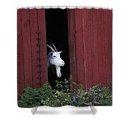 Curious Shower Curtain