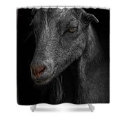 Goat In Red Barn Shower Curtain