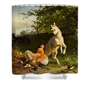 Goat Kid And A Hen Shower Curtain