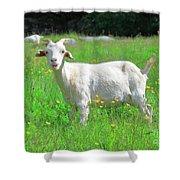 Goat Portrait  Shower Curtain