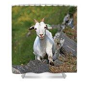 Goat Posing Shower Curtain