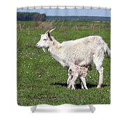 Goat With Just Born Little Goat Spring Scene Shower Curtain