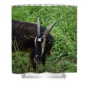 Goat With Long Horns In A Grass Field Shower Curtain