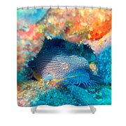 Goatfish Shower Curtain