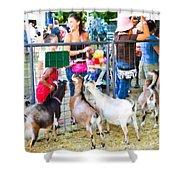 Goats At County Fair Shower Curtain