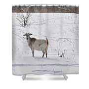 Goats In Snow Shower Curtain