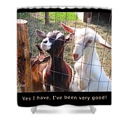 Goats Poster Shower Curtain