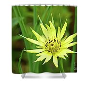 Goatsbeard Shower Curtain