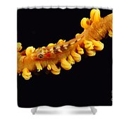 Goby Shower Curtain