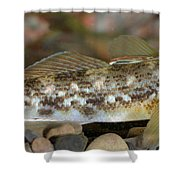 Goby Fish Shower Curtain
