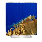 Goby On Wire Coral Shower Curtain