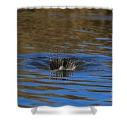 Going Down - A Duck Tale Shower Curtain