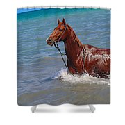 Going For A Swim Shower Curtain