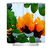 Gold African Tulips Shower Curtain