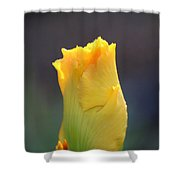 Gold Bud Shower Curtain