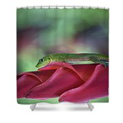 Gold Dust Day Gecko 1 Shower Curtain