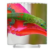 Gold Dust Day Gecko 3 Shower Curtain