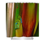 Gold Dust Day Gecko Shower Curtain