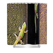 Gold Dusted Day Gecko Shower Curtain
