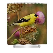 Goldfinch On Thistle Shower Curtain