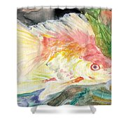 Gold Fish With Purple Shower Curtain