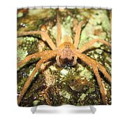 Gold Hunting Spider Shower Curtain