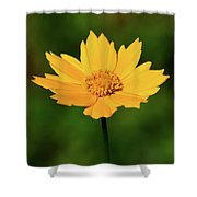 Gold In The Garden Shower Curtain