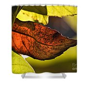 Gold Leaf In Fall Shower Curtain