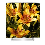 Gold Lilly Shower Curtain
