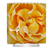 Gold Rose 1 Shower Curtain