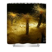 Gold Sea Anemones Shower Curtain
