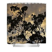 Gold Sunset Tree Silhouette I Shower Curtain