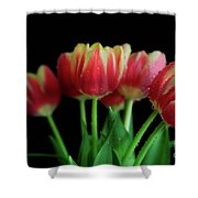 Gold Tip Tulips Shower Curtain by Tracy Hall