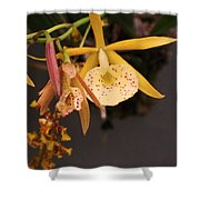 Gold Yellow Orchid  Shower Curtain