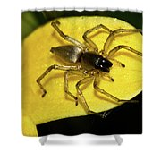 Golden Arachnid  Shower Curtain