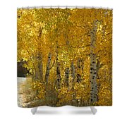 Golden Aspen Shower Curtain