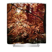 Golden Autumn Sunshine Shower Curtain