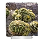 Golden Barrel Cactus Shower Curtain