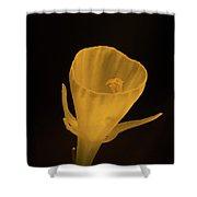 Golden Bells Carpet Daffodil With Black Background Shower Curtain