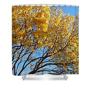 Golden Boughs Shower Curtain