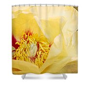 Golden Bowl Tree Peony Bloom Shower Curtain