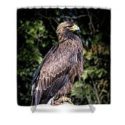 Golden Boy Shower Curtain