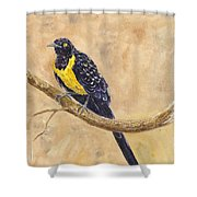 Golden Breasted Starling Shower Curtain