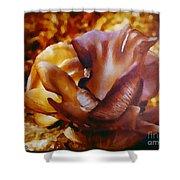 Golden Brown Wild Mushroom Shower Curtain