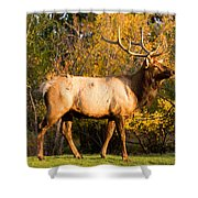 Golden Bull Elk Portrait Shower Curtain