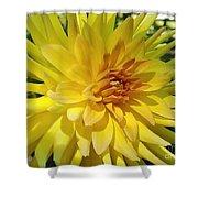 Golden Dahlia Beauty Shower Curtain
